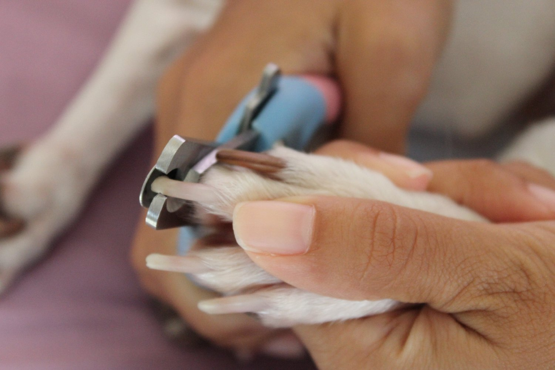 Надо ли обрезать ногти