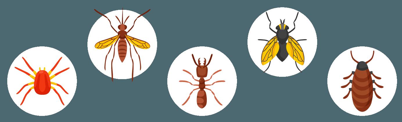 Icone disinfestazione insetti di ogni tipo