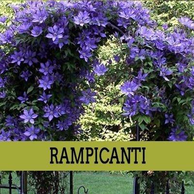 dei fiori di color viola