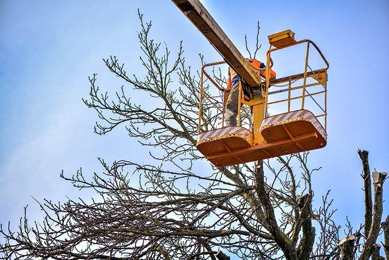 operaio su una gru mentre potatura alberi