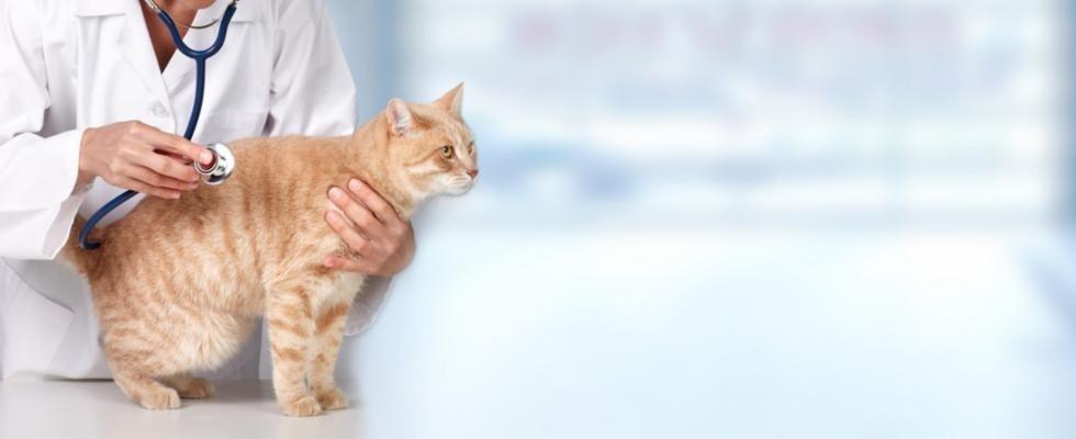Ambulatorio veterinario Astigiano