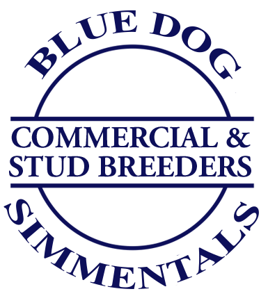 Blue Dog Simmentals Commercial & Stud Breeders