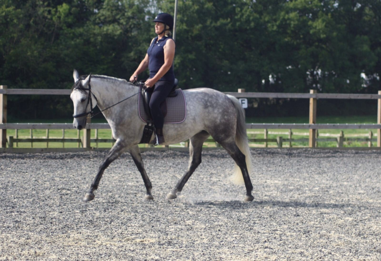 Horse Riding Experience Tanglewood Equestrian Centre