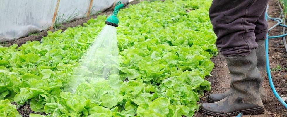 agricoltura biologica pisa