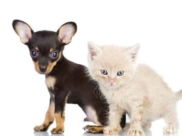 antiparassitari animali domestici