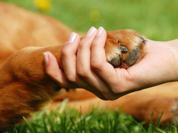 educazione animali