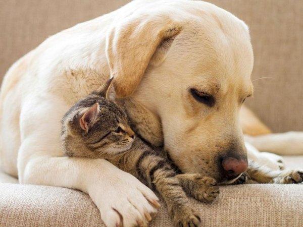 servizi per animali domestici