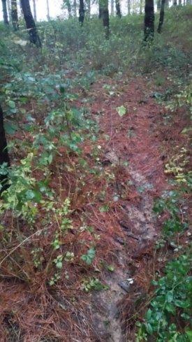 pulizia terreno in pineta prima