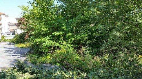 rimozione rovi e piante infestati