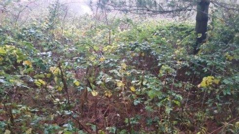 pulizia terreno in pineta prima della manutenzione