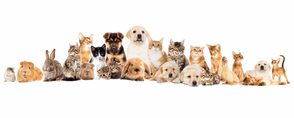 View of healthy pet animals