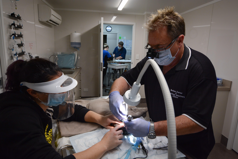Expert pet care in Tauranga
