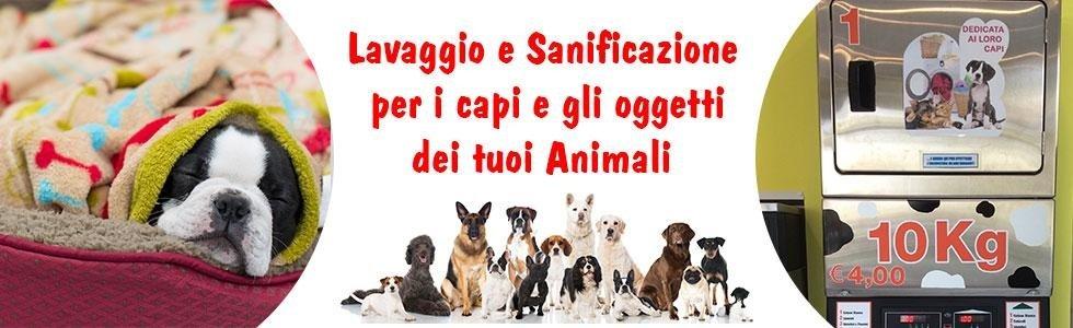 lavaggio e sanificazioni capi animali