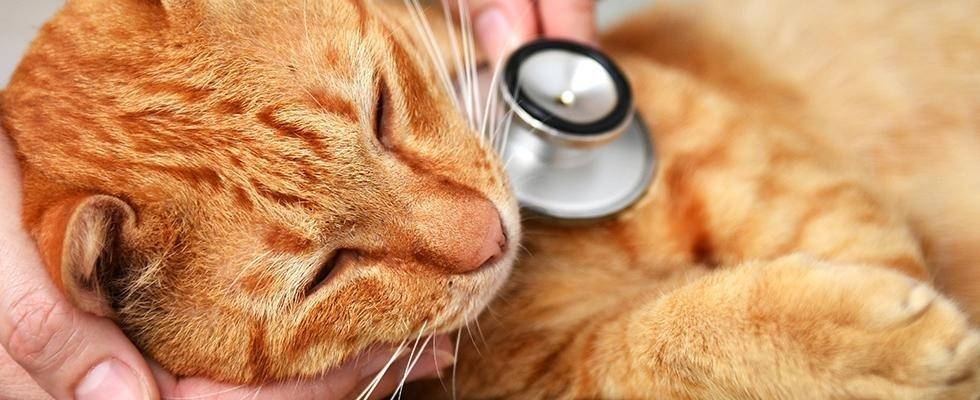 clinica veterinaria canavesana