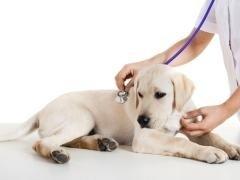 medicine per cure veterinarie