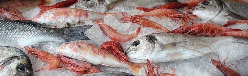 trattoria di pesce palermo