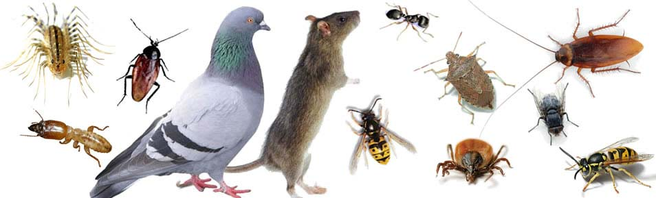 Complete pest control in Rochester, NY