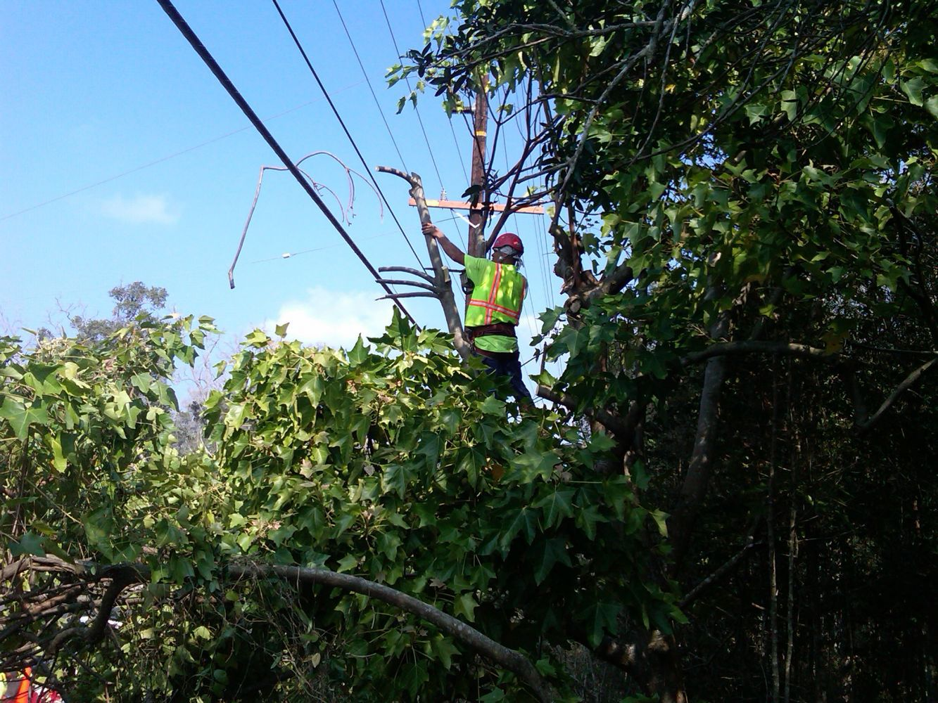A registered consulting arborist resting on site after tree trimming on the Big Island