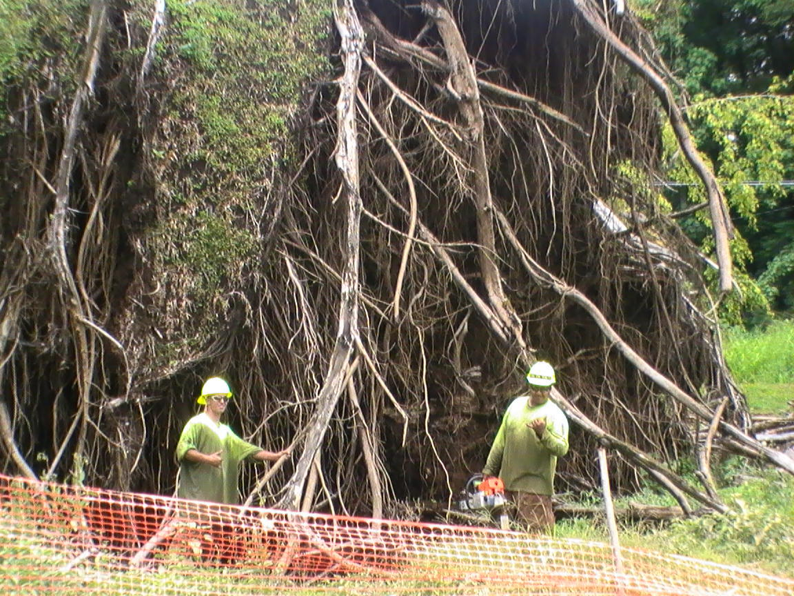 A worker resting on site after tree trimming in  Kamuela, HI