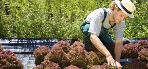 chris smiths happy gardeners employee shaping the flowers