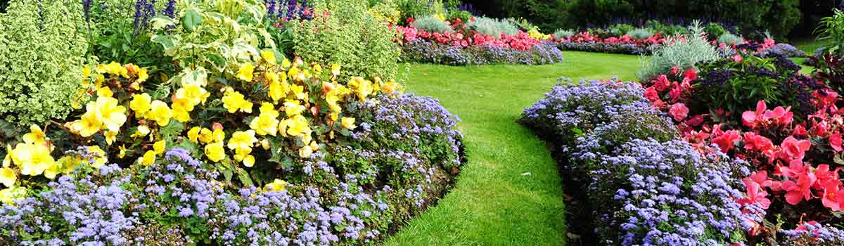 chris smiths happy gardeners garden pathway and flowers