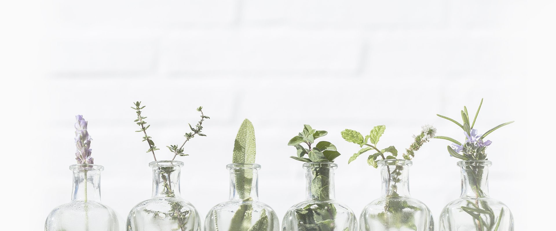tiny herbs in small chemistry jars