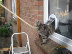 Cat Flaps Coventry Dog Flaps Cat Flap Installers Dog