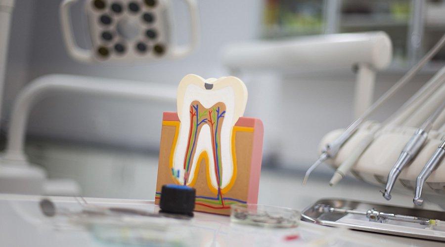 view of dental veins