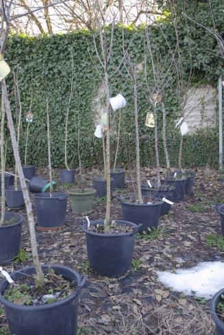 Piante da giardino