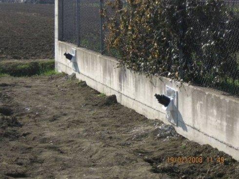 uno scavo e vista di un muretto con una recinzione e una siepe