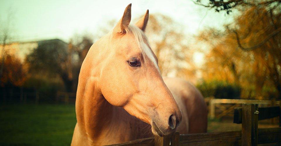Auburn Equine Clinic Equine Vets In Glenavy