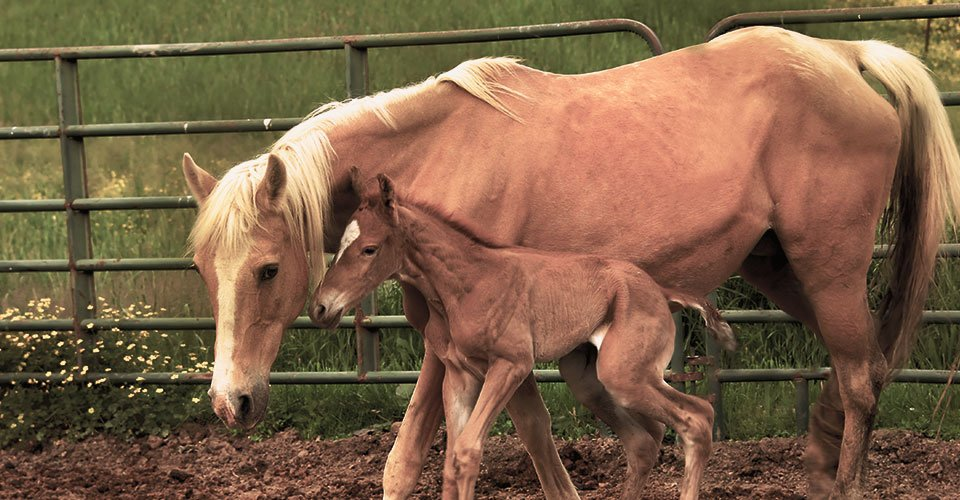 horse and fawn