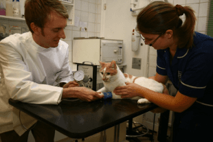 Vet and nurse with cat