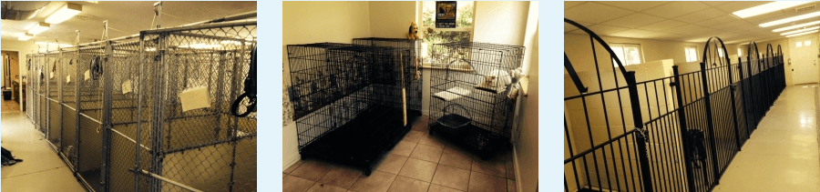 Pet boarding services in South Covington, KY