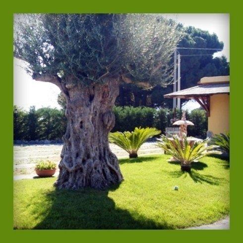 alloggi con giardino