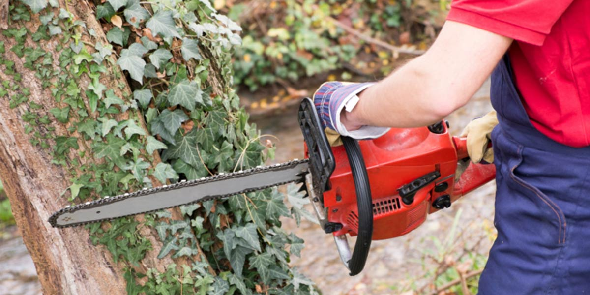 Chainsaw sales on the Sunshine Coast