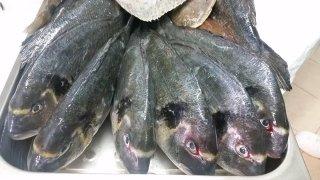 pesce fresco santa teresa