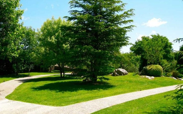 grande albero