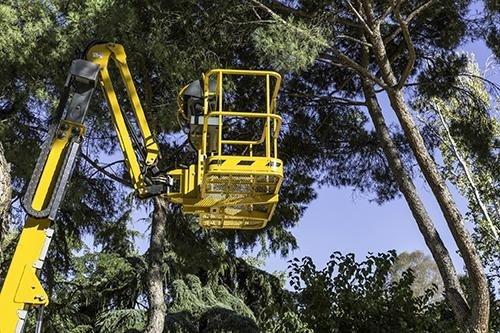 potatura alberi con piattaforma aerea