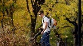 potatura alberi, manutenzione giardini, realizzazione parchi