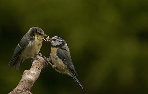 Bird the other bird