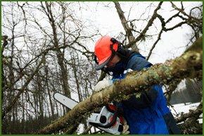 A branch being sawn