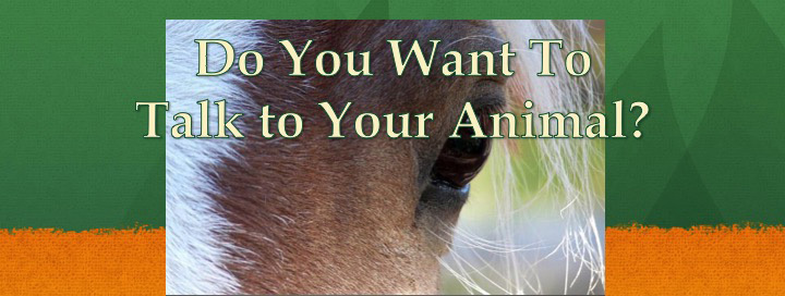 Animal Communication and Healing