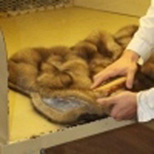 pulizia pelliccia