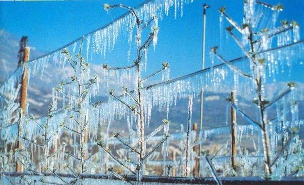Frostschutzbewässerung