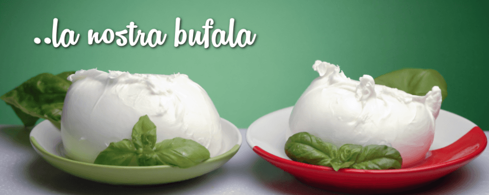Mozzarelle di bufala Casertane