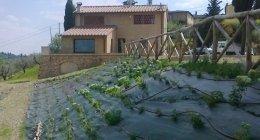 progettazione aree verdi, potature piante alto fusto, realizzazione giardini