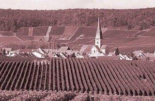 vini dalle vigne pugliesi