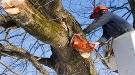 potatura alberi alto fusto