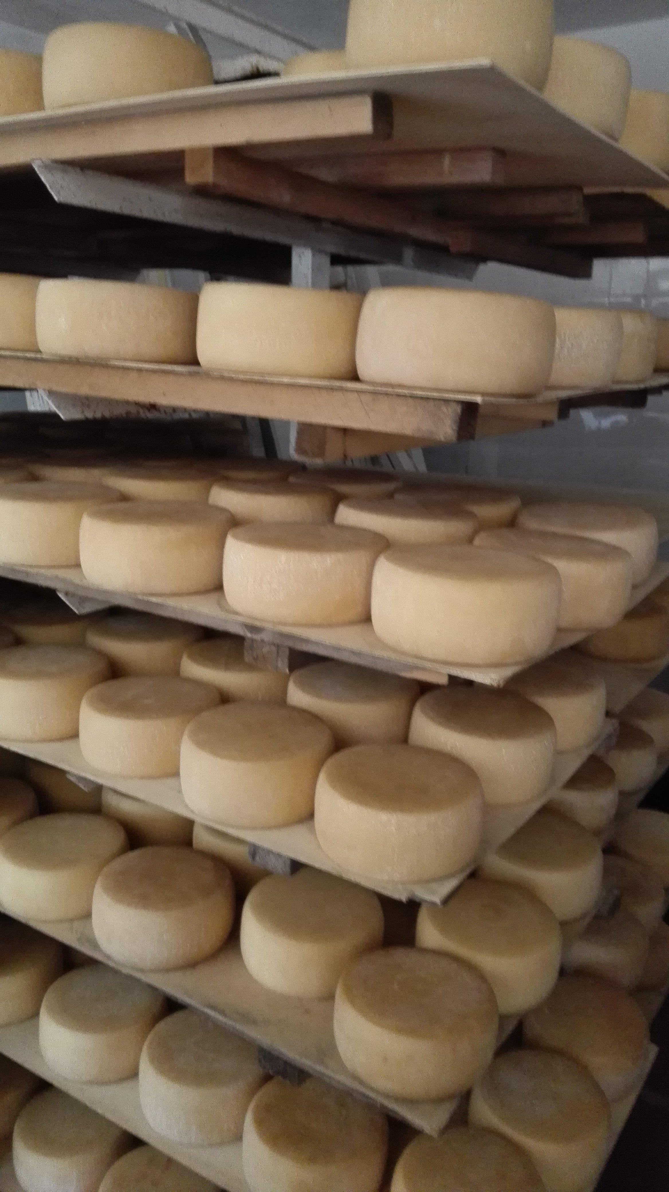 Forme di formaggio conservate